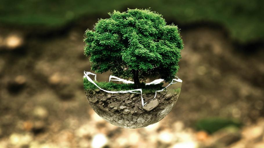 Soil and Plant Science